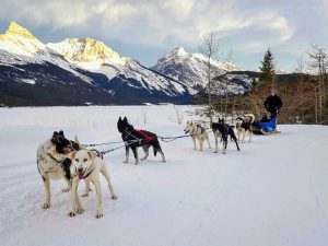 Banff Dog Sledding