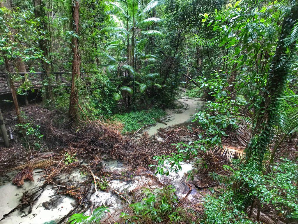 Rainforest Hike on Fraser Island