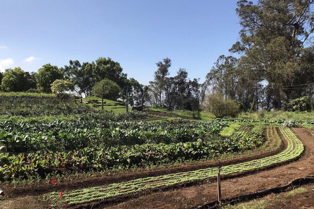 Maui O'o Farm Garden