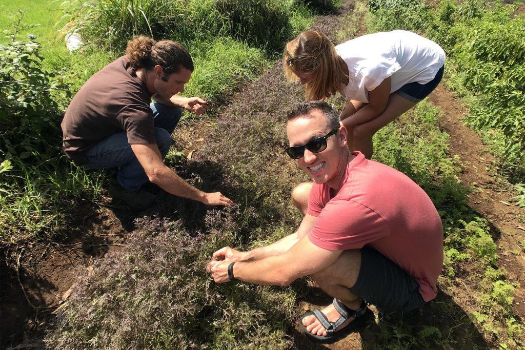 Maui O'o Farm Picking Produce
