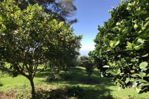 Maui O'o Farm Trees