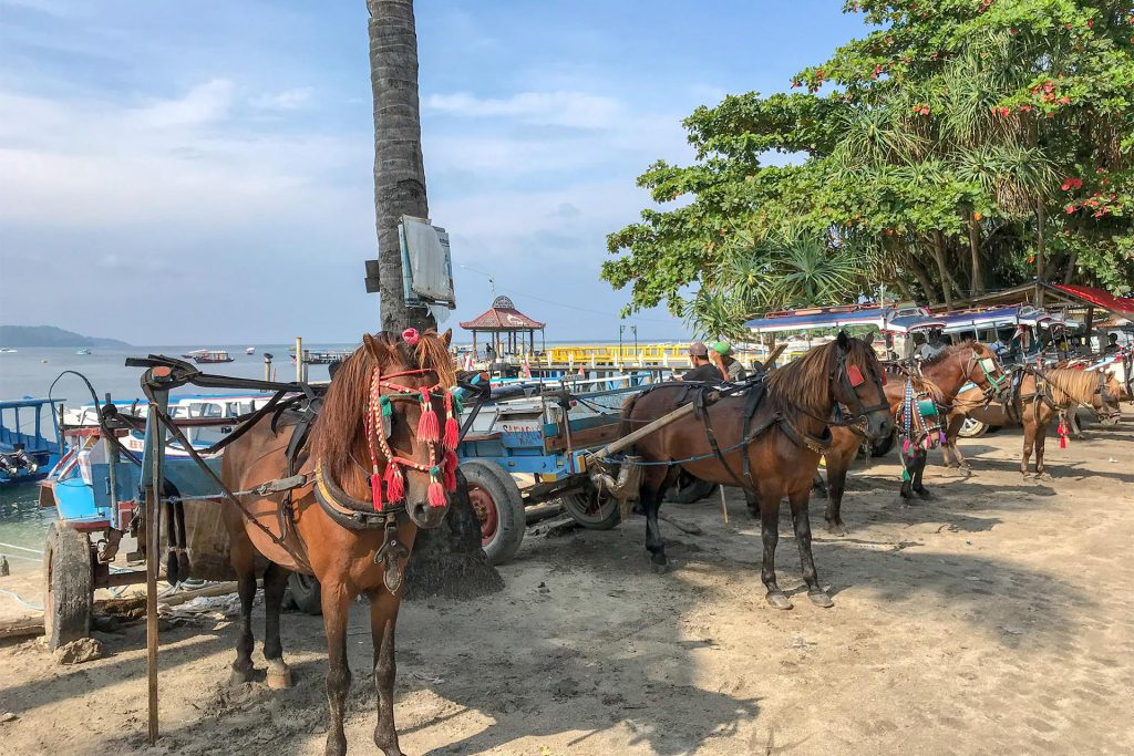 Horses on Gili Air